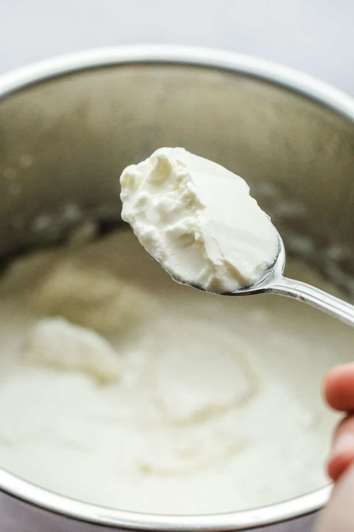 A spoonful of homemade yogurt